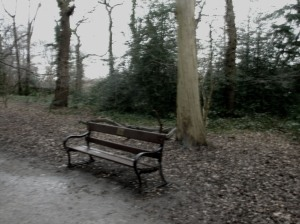 damp woods bench, highgate wood, north london