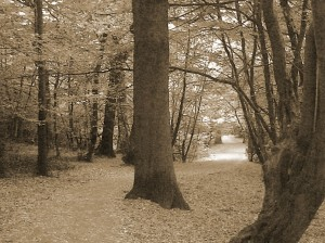 Queen's Wood, North London