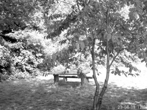 picnictablebw