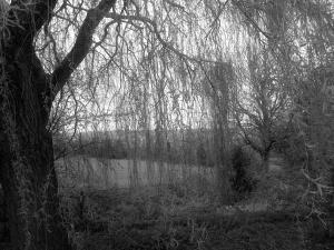 treesbw