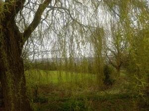 treesfour
