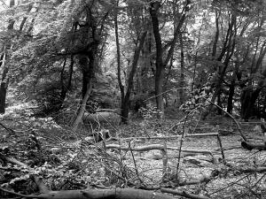 woodsin pringbw